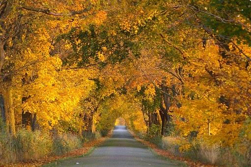 autumn-1010528__340