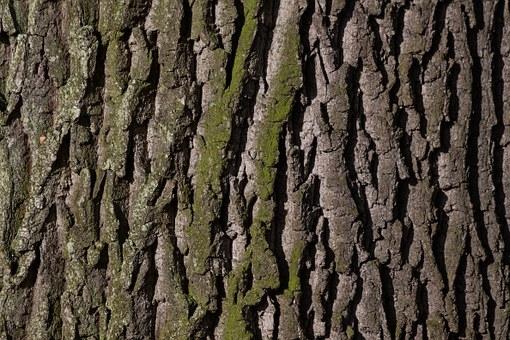 bark-207252__340