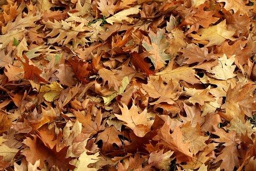 foliage-3766103__340