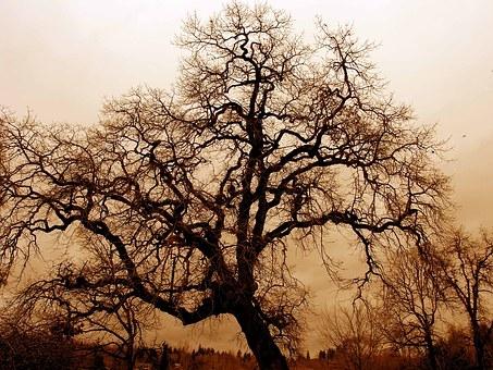 gnarled-old-oak-1166907__340