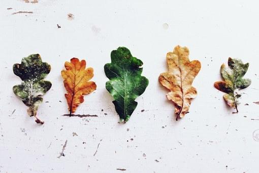 leaves-970188__340