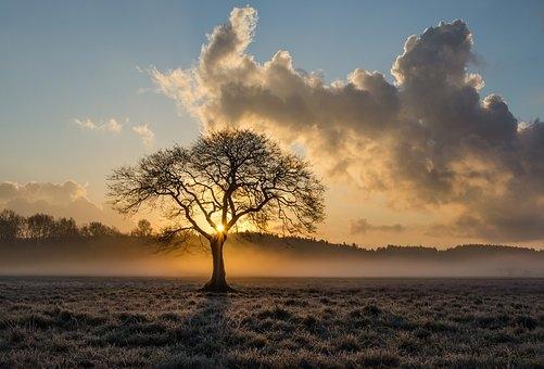 lone-tree-1934897__340