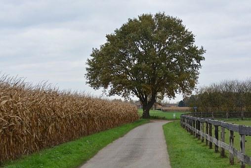 tree-1034150__340