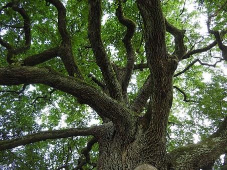 tree-893272__340