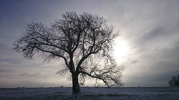 tree-989781__340