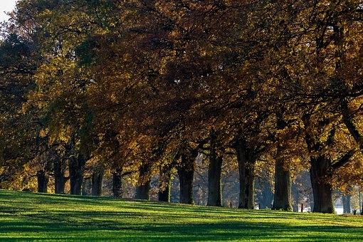 tree-lined-avenue-3848327__340