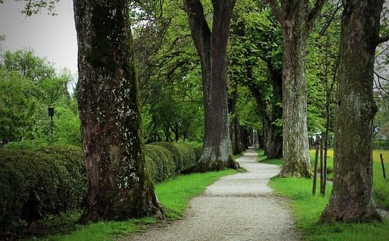 trees-338279__340