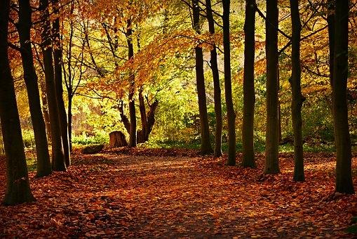 trees-3895213__340