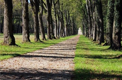 trees-451089__340