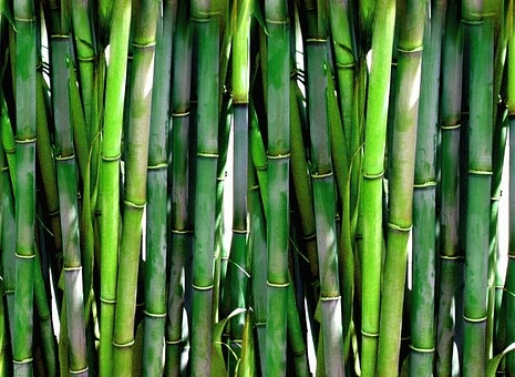 bamboo-20936__340