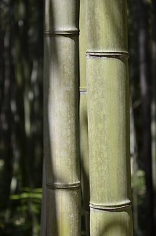 bamboo-2398445__340